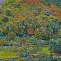 2006, Autumn, Available -$5,000, Acrylic on Canvas, 700x1100 mm