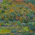 2008, Autumn  1100x700mm  Acrylic On Canvas